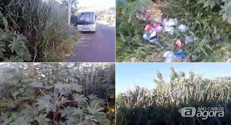 Terreno abandonado causa preocupação no Aracy 2 - Crédito: Divulgação