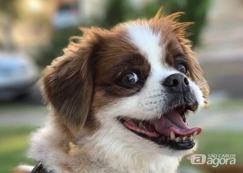 Homenagem da Funerais Pet ao cachorro Max -