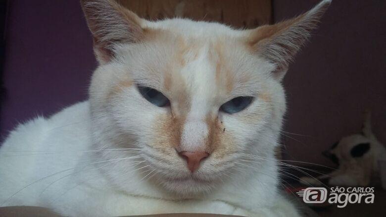 Homenagem da Funerais Pet ao gatinho Juca -