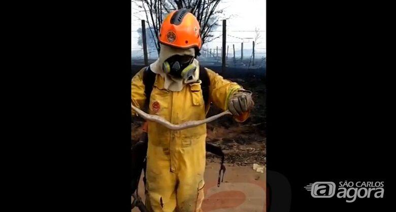 Bombeiros salvam cobra de incêndio em mata no Embaré - Crédito: Reprodução