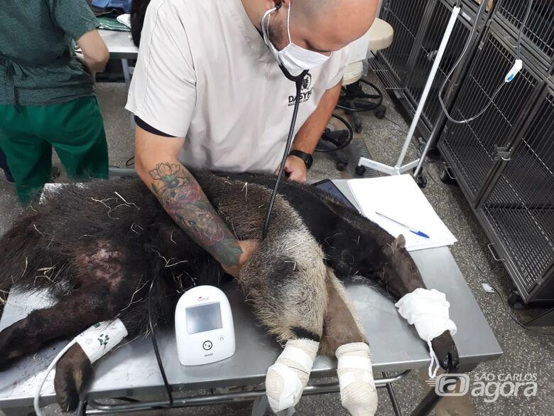 Professor da UNICEP participará de atendimentos aos animais silvestres do Pantanal - Crédito: Divulgação
