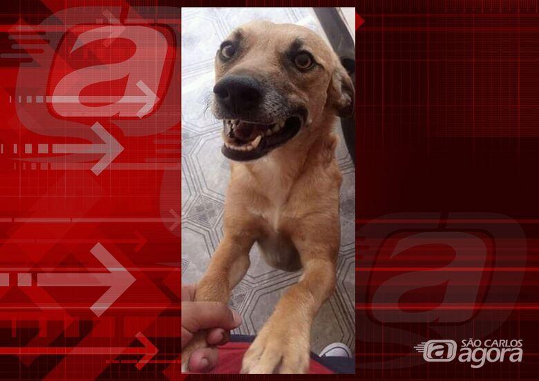 Cachorrinho Marley desapareceu na região do Santa Felícia. Ajude a encontrá-lo. -