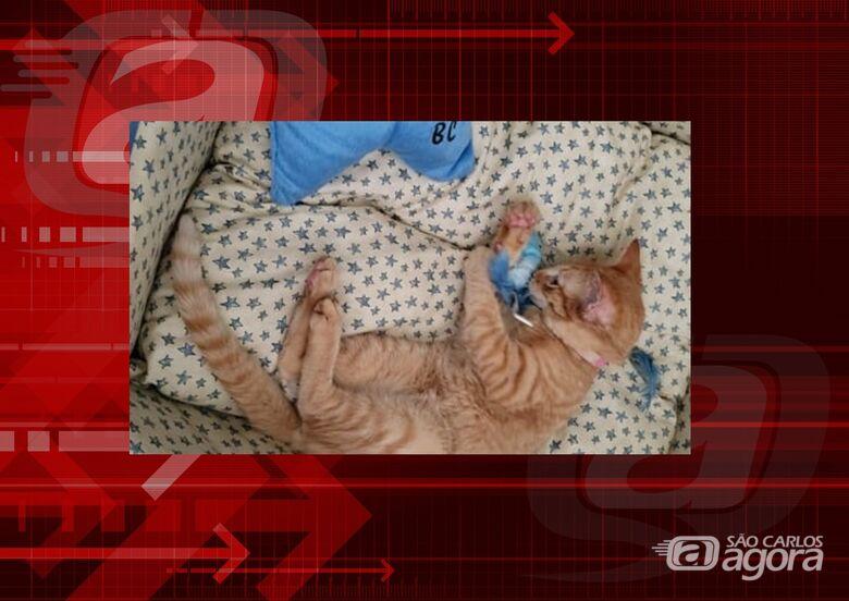 Homenagem da Funerais Pet ao gatinho Caramelo -
