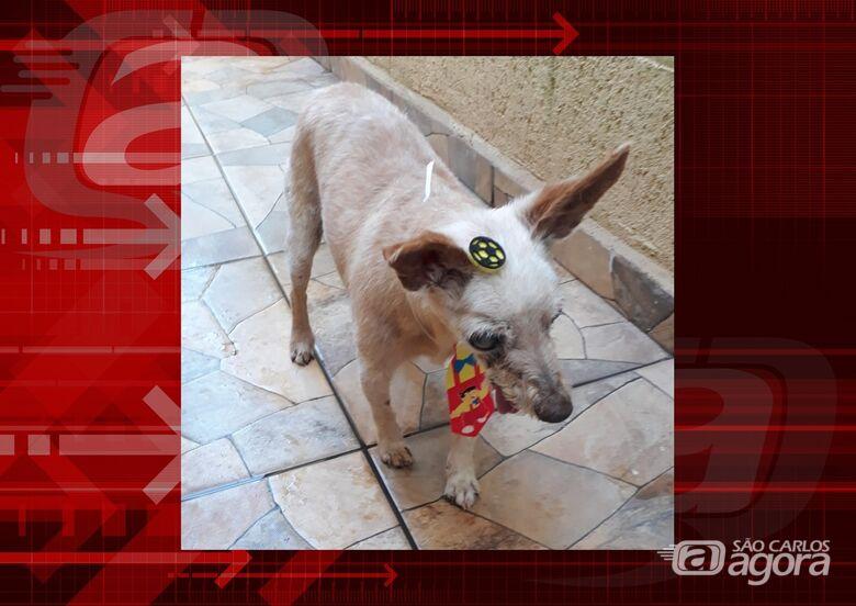 Homenagem da Funerais Pet ao cachorrinho Vitório -