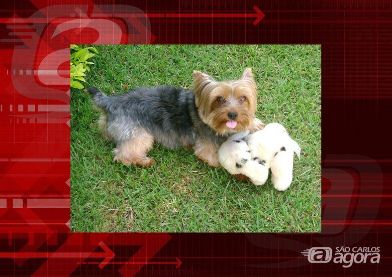 Homenagem da Funerais Pet ao cachorrinho Nino -