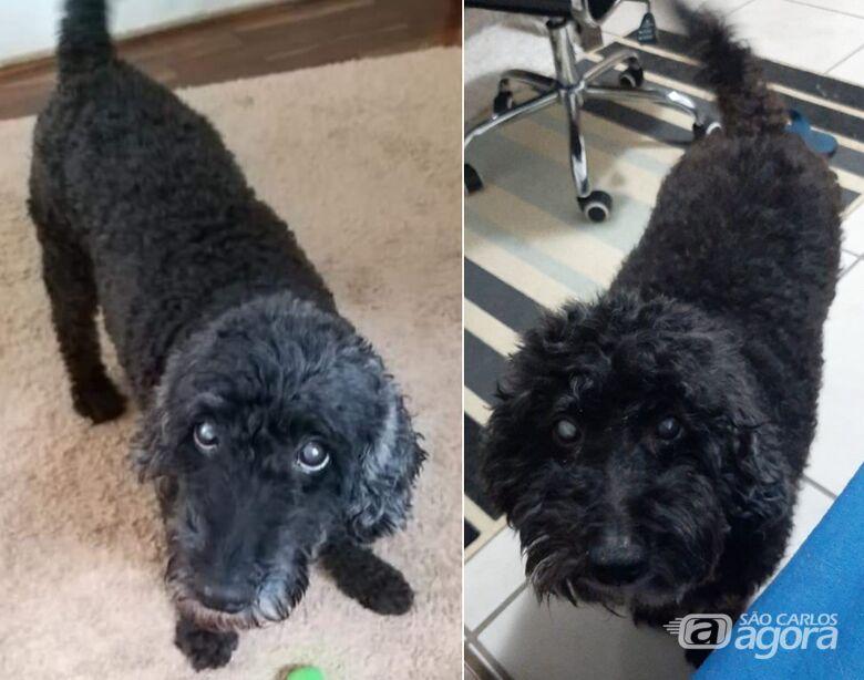 Procura-se cachorra Belinha; foi vista pela última vez na região central -
