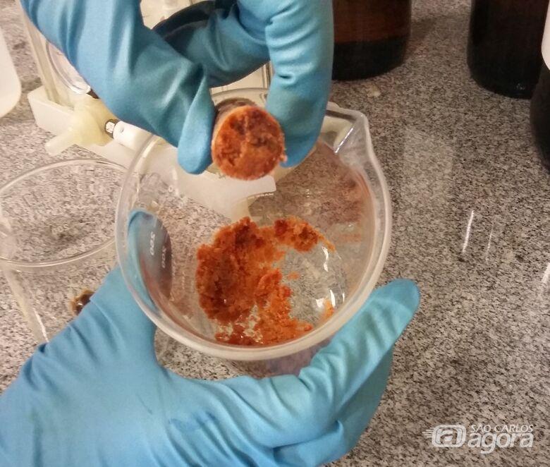 Estudo realizado por grupo de cientistas mostrou que dois compostos do produto natural foram capazes de conter a multiplicação de células com câncer de mama, cérebro, ovário e próstata - Crédito: Thais Banzato
