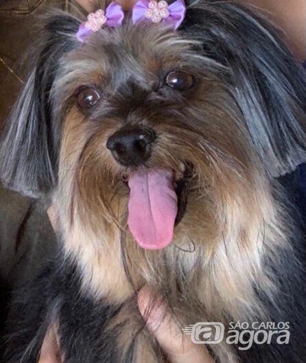 Homenagem da Funerais Pet a cachorrinha Laila -