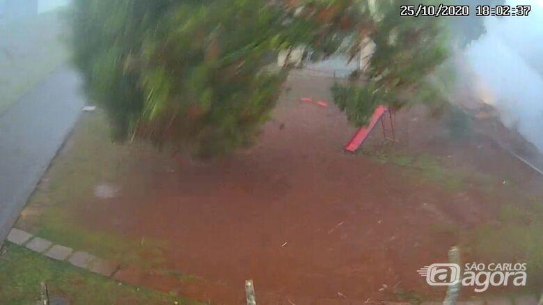 Câmera flagra queda de árvore em condomínio no Jardim das Torres - Crédito: Reprodução
