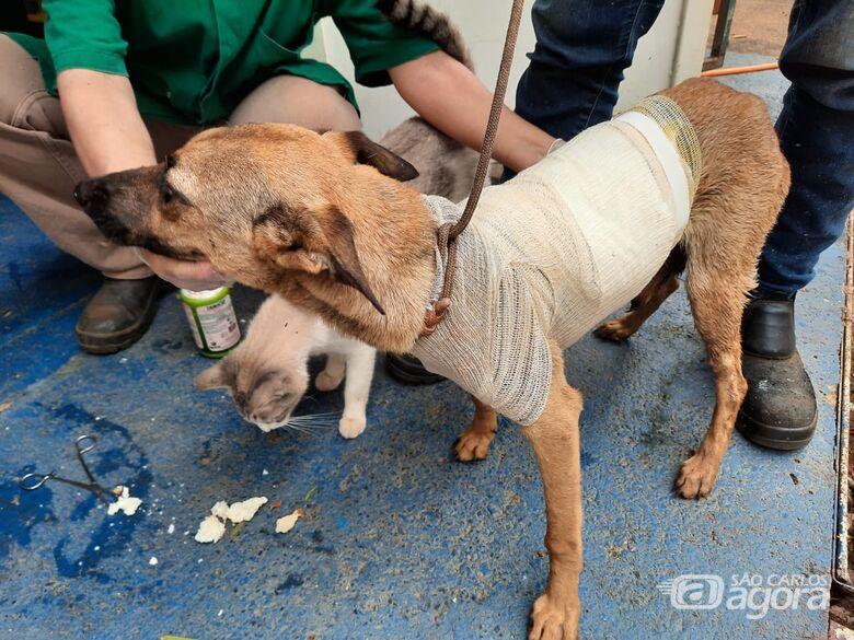 Departamento de Defesa Animal recolhe mais de 50 animais por mês -