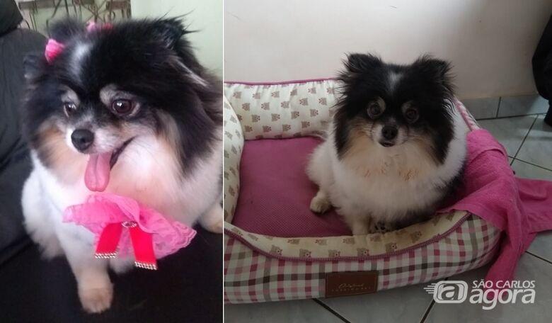 Cachorrinha Pandora desapareceu na região do Jardim Ricetti -