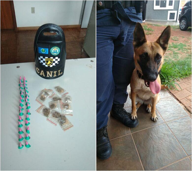 Droga e a cadela responsável pela localização do entorpecente - Crédito: Divulgação/GCM