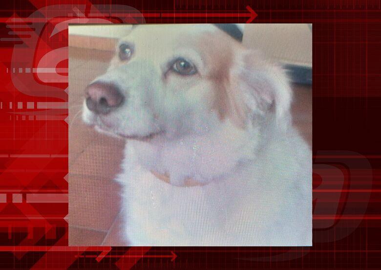 Homenagem da Funerais Pet a cachorrinha Hanna -