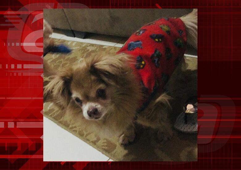 Homenagem da Funerais Pet ao cachorrinho Pitoco -
