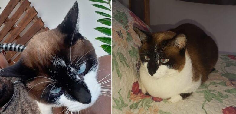 Gatinha Marrie desaparece na região do Santa Felícia -