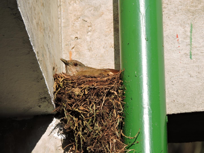 Pesquisa da UFSCar investiga comportamento de aves ao fazer ninhos em prédios