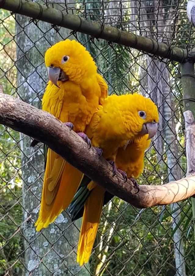 Ararajuba é furtada do Parque Ecólogico de São Carlos