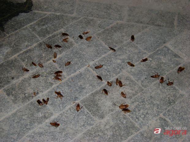 http://media.saocarlosagora.com.br/uploads/baratascostadosol2.jpg
